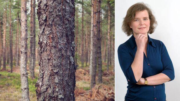 Birgitta Sennerdal, Skogsägare och skribent