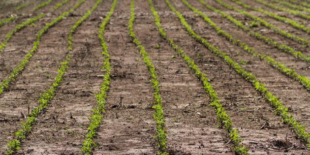 Snabb ökning av sojabönsodling inom EU