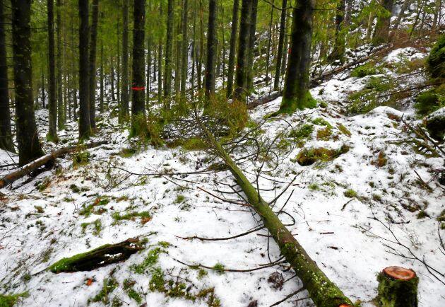 Säljaren ska själv se till att skogen är förröjd innan anbuden tas in.
