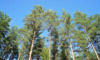 Kommunen fällde felaktigt 180 träd på hans mark