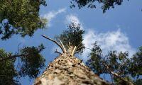 900 hektar nya reservat