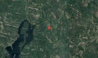 Skog i Leksands kommun såld