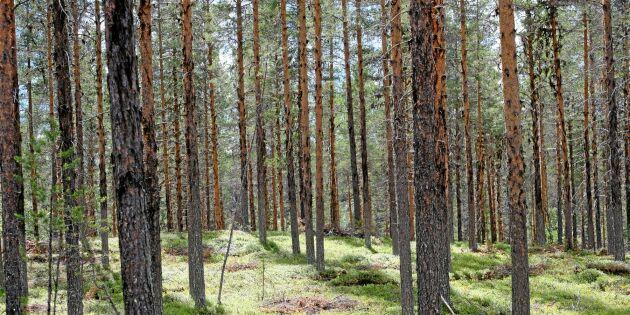Hur vill du som skogsägare ersättas för kolinlagring?