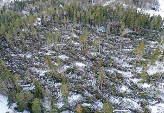 Så här såg det ut i dag när Thomas Nordemo inventerade sina marker med drönare.