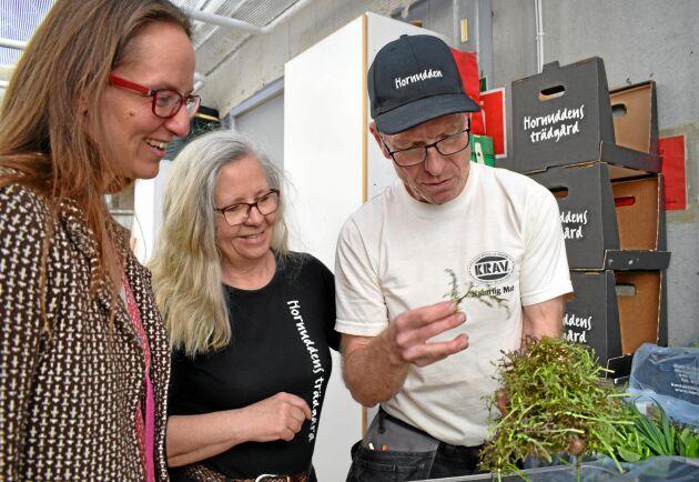 Karin och Mats Sjöstedt på Hornuddens Trädgård packar säsongens första grönsakslådor till andelsägarna. Till vänster Karin Lundell, måltidschef på Strängnäs kommun, och undersöker utbudet.
