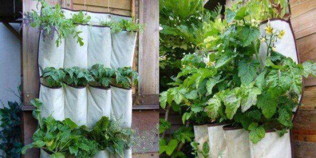 Odling uppåt väggarna med skohållaren Skubb