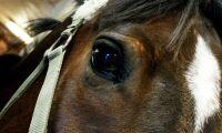 Hästar svalt ihjäl på gård – åtalad frias