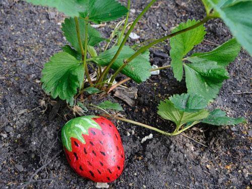 jordgubbs-sten