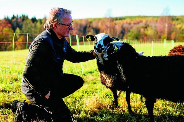 Det finns även får på gården.