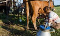 Svenska mjölkbönder inte de enda som knäar