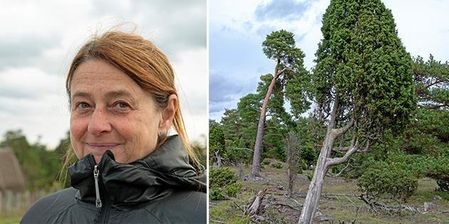 Köpte skog – bara för att bevara den