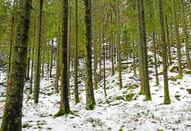 Fin skog ska konkurrensutsättas, anser Tobias Nilsson och Johan Ardegård.