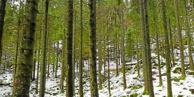 Rätt tid sälja skog på rot