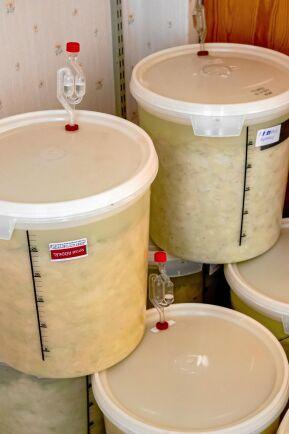 Mjölksyrebakterierna arbetar för fullt med att producera nyttigheter och smaker i syrningstunnorna.