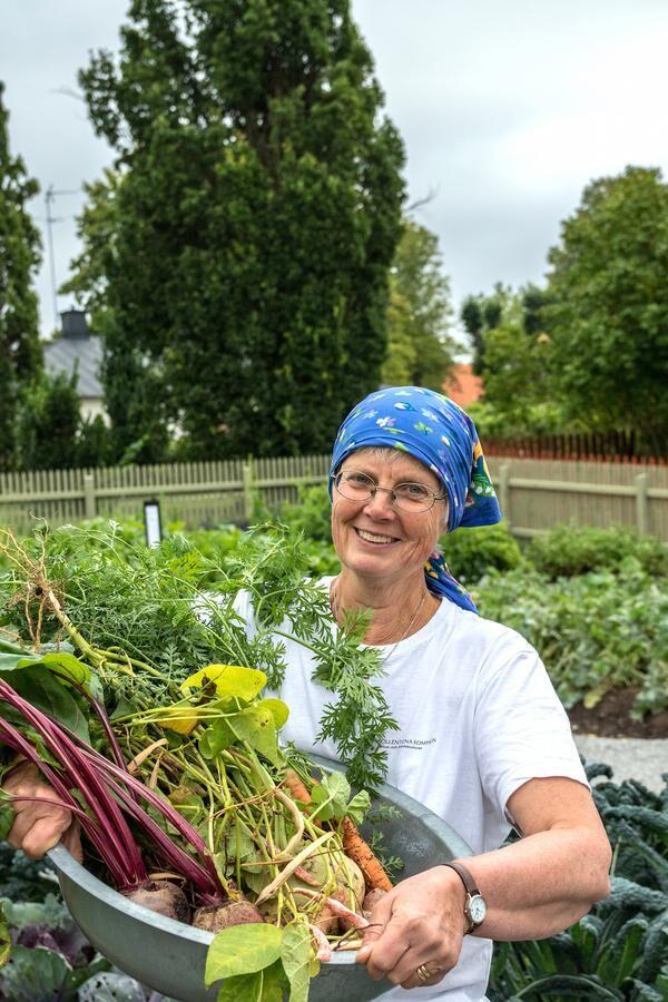 Karin Sjöholm odlar historiska köksväxter i en visningsträdgård vid Edsbergs slott i Sollentuna. Foto: Agneta Bergström
