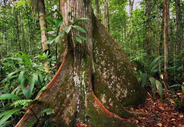 Representanter för Brasiliens ursprungsbefolkning litar inte på att Mercosuravtalet i dess nuvarande form skyddar landets ekosystem, som den atlantiska regnskogen där denna bild är tagen, från exploatering.