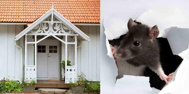Isolera huset rätt – och undvik råttor