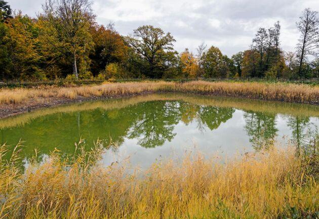 Under vinterhalvåret samlas 10 000 kubikmeter avrinningsvatten i den konstgjorda dammen.
