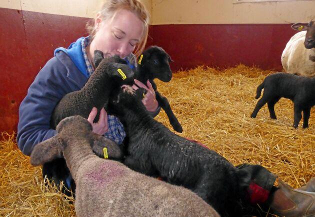 I år har det fötts ovanligt många trillingar och fyrlingar. Erika Olsson har därför behövt stödutfodra några av lammen med mjölkersättning, något som gjort henne populär.