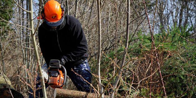 S vill satsa 800 miljoner på skogsröjning