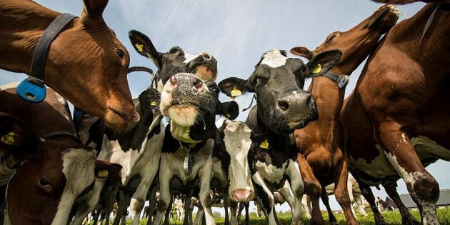 Mjölkbönder ser ökad lönsamhet