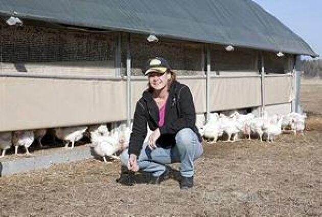 Fria fåglar. Jenny Lundgrens kycklingar föds upp i mobila hönshus på Erik Karlsgården utanför Köping. Husen flyttas till ny mark med hjälp av traktor efter varje omgång vilket bidrar till ett lågt smittryck. Kycklingarna är inte inhägnade men håller sig ändå i närheten. Foto: Kim Lill