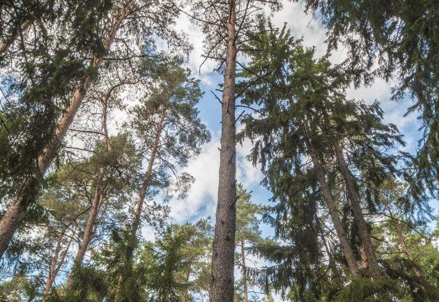 Med 87,2 miljoner kronor från nyemissionen kan Skogsfond Baltikum fortsätta verksamheten med att köpa, utveckla och så småningom sälja skog i Baltikum.