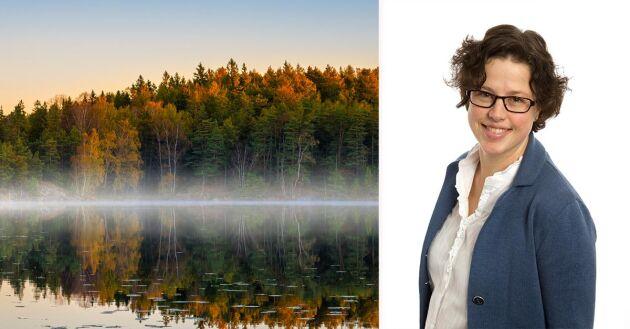 Vibeke Alstad, LRF Konsult, svarar på läsarfrågor rörande skogsekonomi.