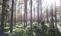 """Låt Sveaskog satsa rejält på naturturism"""