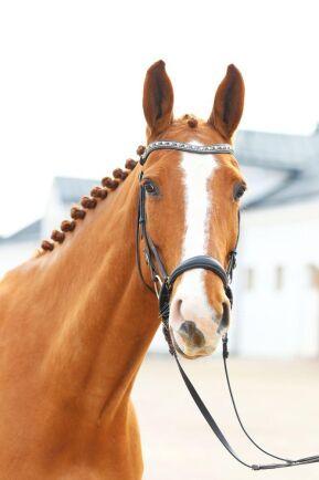 Hästen beskrivs som positiv, vänlig, okomplicerade och alltid gör sitt bästa. Han utbildas just nu på Strömsholm.
