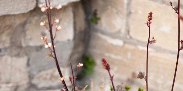 Blomster hela säsongen – så skapar du en evighetskruka