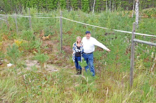 Erik Sandberg konstatera att tall, rönn och sälg betas hårt utanför hägnen. Där tar också gräset över. Här med hustrun Ulrika.