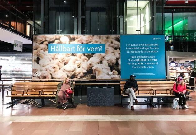 Djurens rätts kampanj på centralstationen i Göteborg på måndagen.
