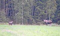"""""""Regeringen måste besluta om längre jakttider"""""""