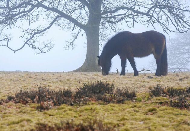Höst och hästen går på frostigt bete. Här lurar faror som kan ge fång eller förgiftning.