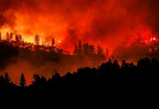 I november 2018 rasade en svårsläckt skogsbrand i Paradise, Kalifornien. Över 40 personer omkom i branden.