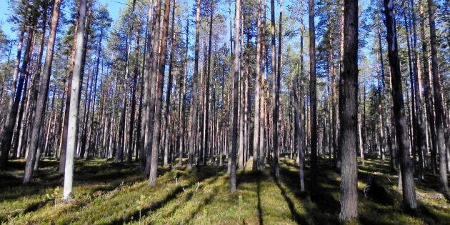 Miljonregn över skoglig forskning