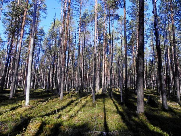 SLU får 100 miljoner kronor till forskning inom skogsproduktion och skogsskötsel.