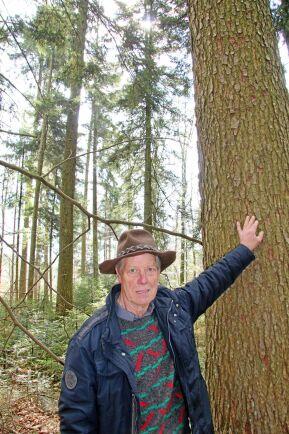 Skogsägaren Dieter Wieland vid en silvergran (Abies Alba) på sin skogsfastighet utanför Schwäbisch Hall.