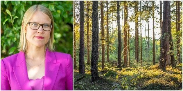 Mer pengar till skydd av skog i höstbudgeten