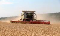Tysk torka förstörde fjärdedel av höstveteskörden