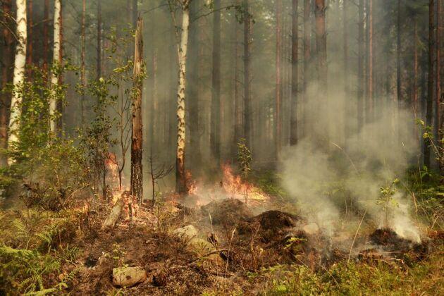 Den stora skogsbranden i Västmanland orsakade stora skador. Under pågående brand meddelade dåvarande regeringen att skogsbranden skulle utredas. Nu har utredaren fått nya direktiv.