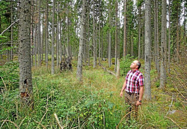 117 000 kronor bedömer Lars Forsling att turerna kring avverkningen kostat honom ekonomiskt.