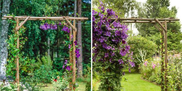 Guide: Så bygger du en blomstrande pergolaportal