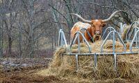 EU och USA gör upp om köttkvot