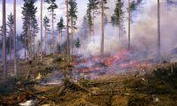 Intäkter från naturvård lyfte Sveaskog