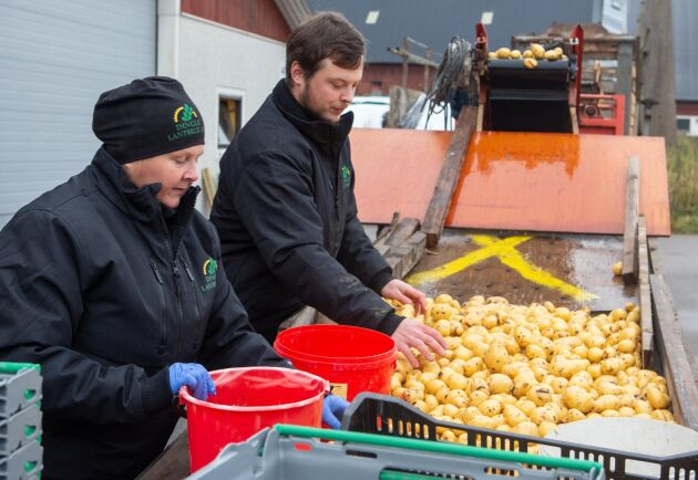 Dingle Lantbruk behövde investera i ett flertal mindre maskiner till grönsaksodlingen som var en ny verksamhet för dem. Maria Johansson och Alexander Johansson sorterar tvättade potatisar vid maskinen.