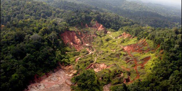 Skatteparadis finansierar ofta skogsskövling