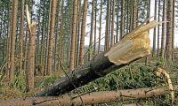 Prisfall på bostäder kan drabba skogen