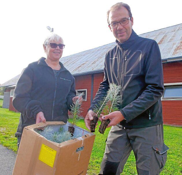 Anita och Anders Englund i Sandåkra säljer skogsplantor som aldrig förr.